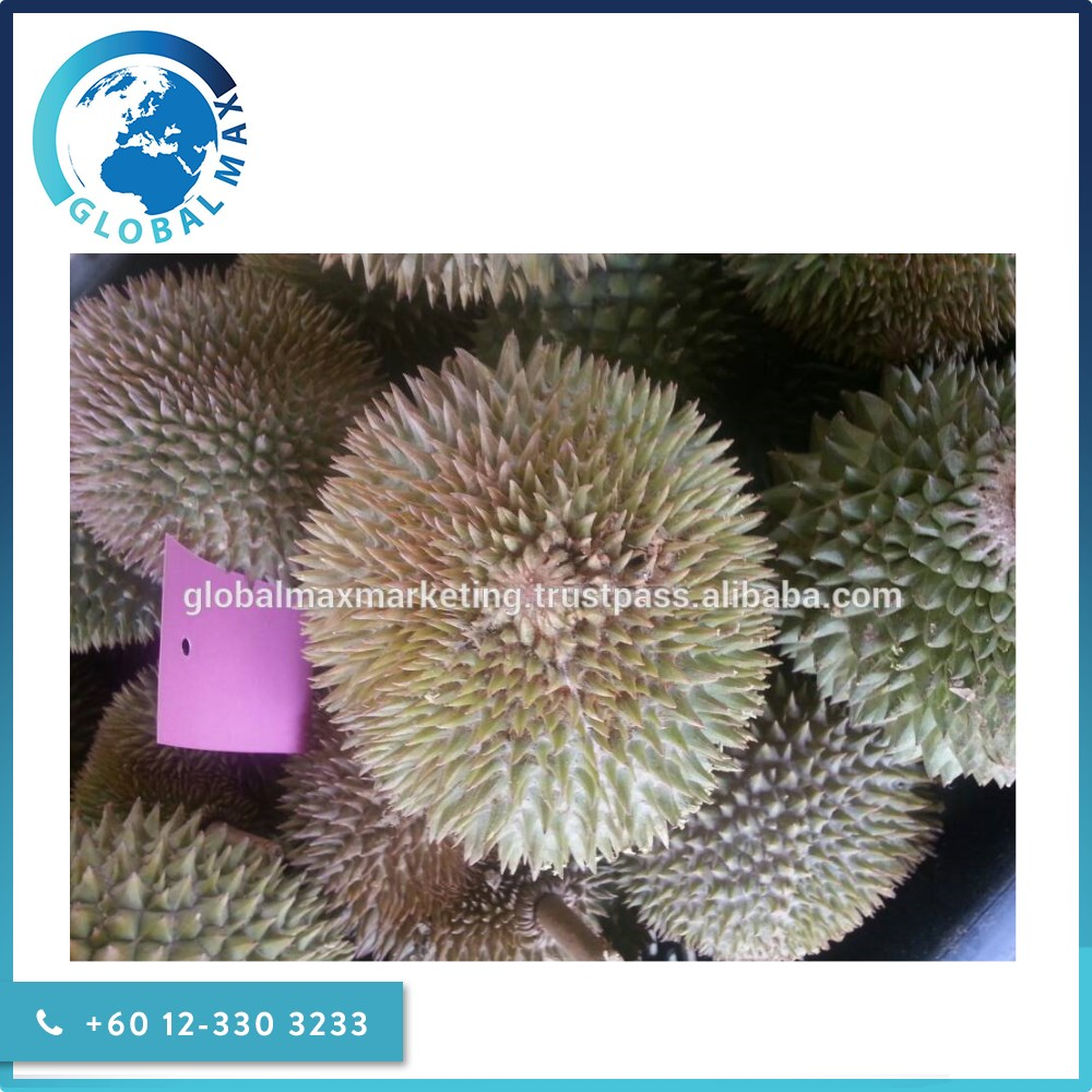 Premium Grade - Fresh Durian Fruit for Sale
