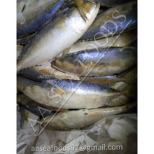 Export Indian Mackerel Frozen Fish seafood from PAKISTAN closed