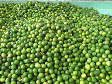 Fresh fruit lemon green - seedless best price
