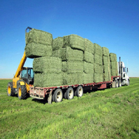 We Supply Alfalfa Hay Bale Grade A in Large and Small Quantity