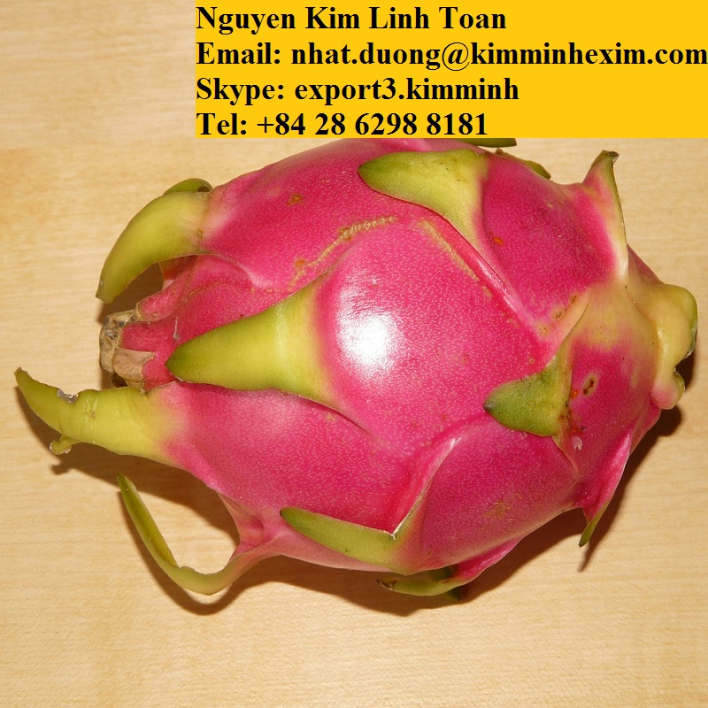 FRESH RED DRAGON FRUIT