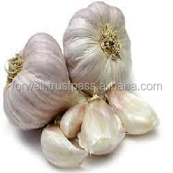 Egyptian fresh garlic for sale best market competitive price