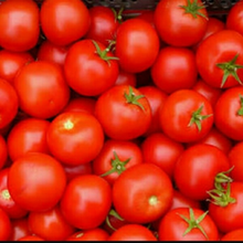 farm fresh tomatoes for sale/fresh green tomatoes