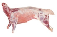 lamb meat CARCASS