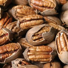 CHEAP PRICE REW ORGANIC PECAN NUTS FOR SALE