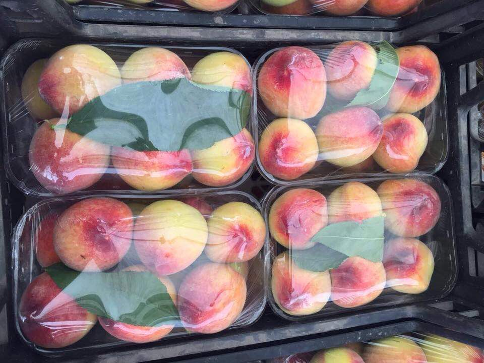 egyptian fresh peach high quality