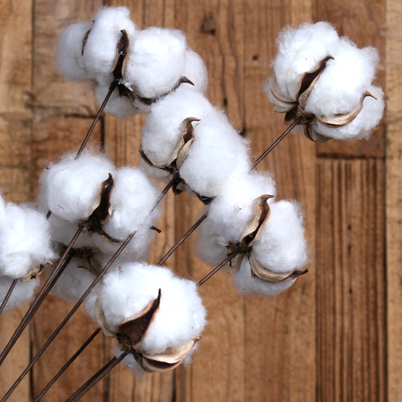 Top Quality Raw Cotton