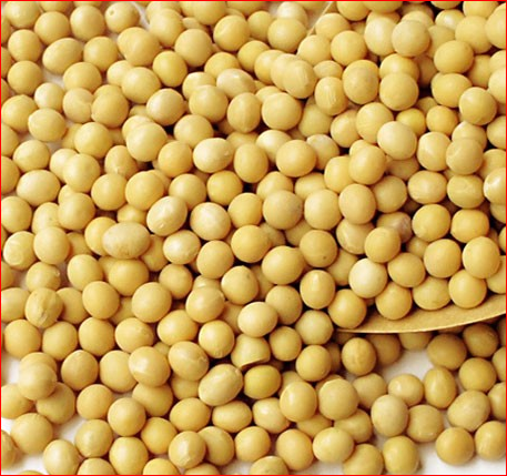 Quality Soyabean Seed