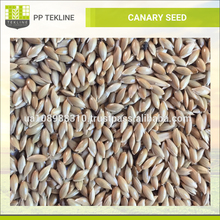 High Quality Ukraine Canary Bird Seed