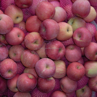 Quality Fresh Apple Red Fuji Apple (20kgs/Carton Packing)