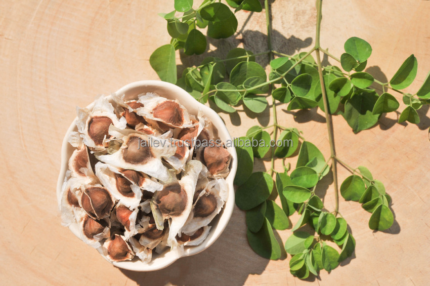 Moringa Oleifera Seeds for Planting