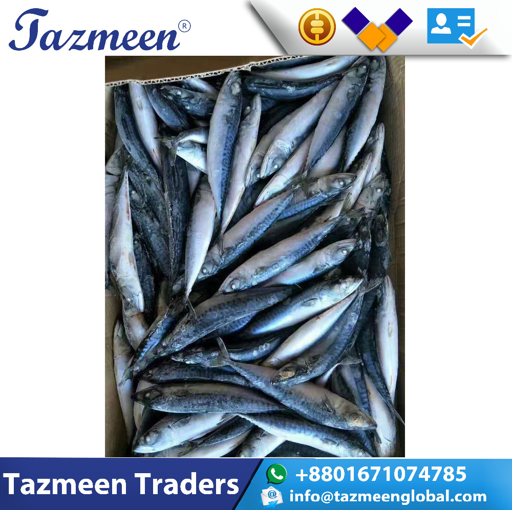 New Stock With Competitive Price Frozen Mackerel Fish