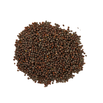 Indian Origin Mustard Seed In 50 Kg. Jute Or PP Bag Packing
