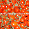 Egyptian red Tomato High Quality with best price new crop