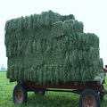 ALFALFA HAY - Premium Grade - Double Compressed Big Bales - High Protein