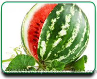 water melon fruits sweet melon price