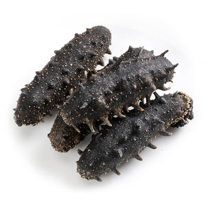 Natural/High Quality dried sea cucumber