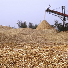 VIETNAM ACACIA WOOD CHIPS FOR PAPER PULP