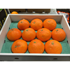 Contains dietary fiber and pectin Japanese tangerine wholesale