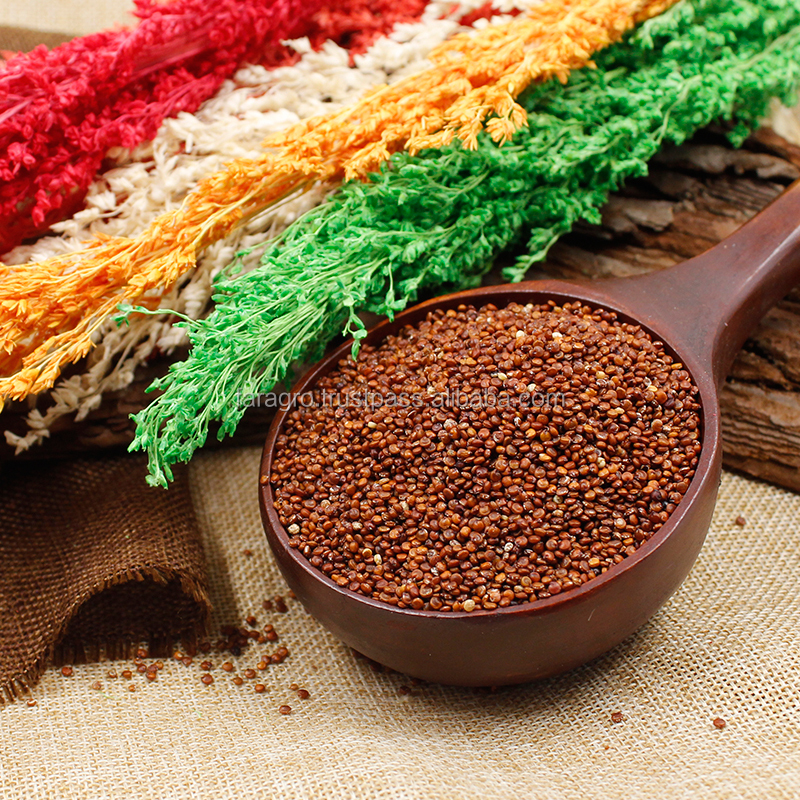 High quality red quinoa export to global