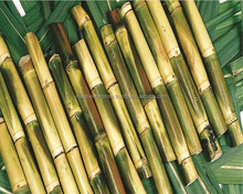 Sweet juicy Fresh Sugarcane with Best competitive Price