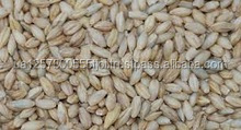 Wheat, Barley, Canary Seeds, Clove Grass, Timothy Hay Best Price