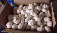 First grade pure white fresh garlic/ Top quality/ Affordable price