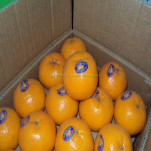 hot sale high quality fresh mandarin Egypt