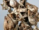 DRY STOCKFISH HEAD, STOCK FISH COD,STOCK FISH TUSK