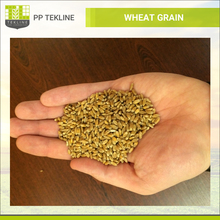 Ukraine Grade 1 Wheat Grain Prices