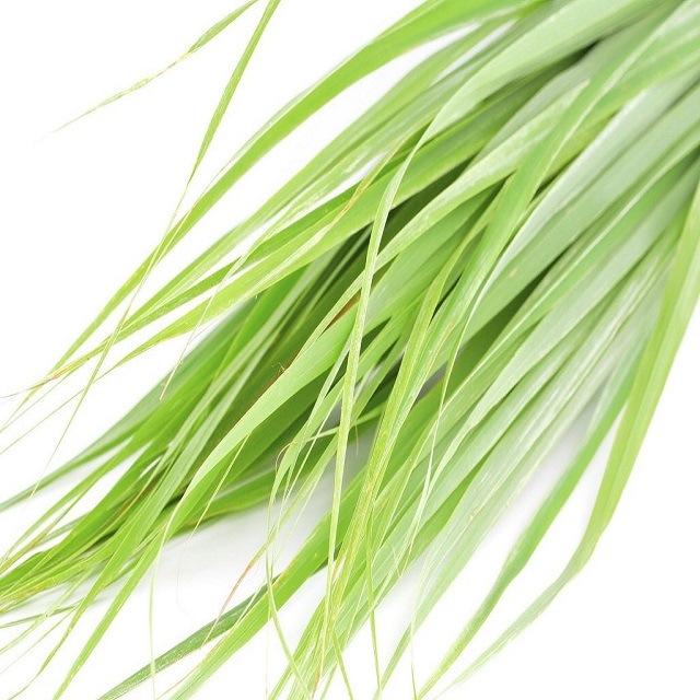 100% Pure Organic & Natural Citronella Oil for Bulk