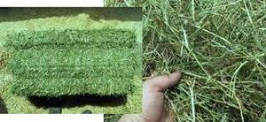 Alfalfa Hay Bales and Pellets/ alfalfa pellets for horses