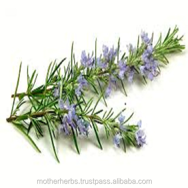 100% Pure & Natural Rosemary Extract Suppliers