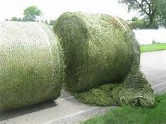 Ukraine Grade A Quality Timothy Hay , Alfafa Hay Available For Nourishing Animals