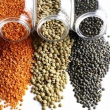 Quality Split Red Lentils & Red Whole Lentils from Canada