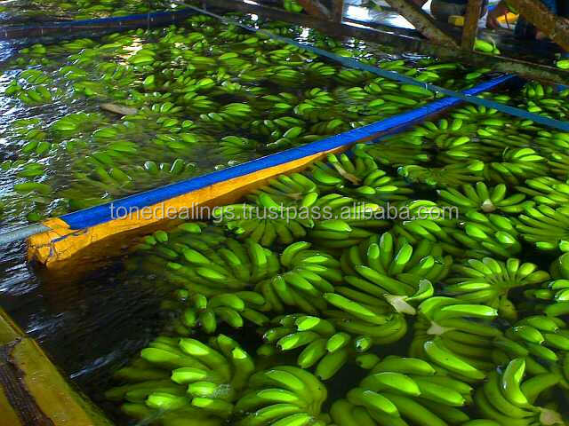 Buy Cavendish Banana From India