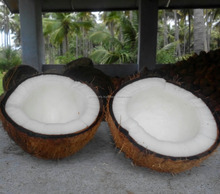 Best Coconut Semi Husked above 500gms