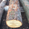 Walnut Lumbers And Logs