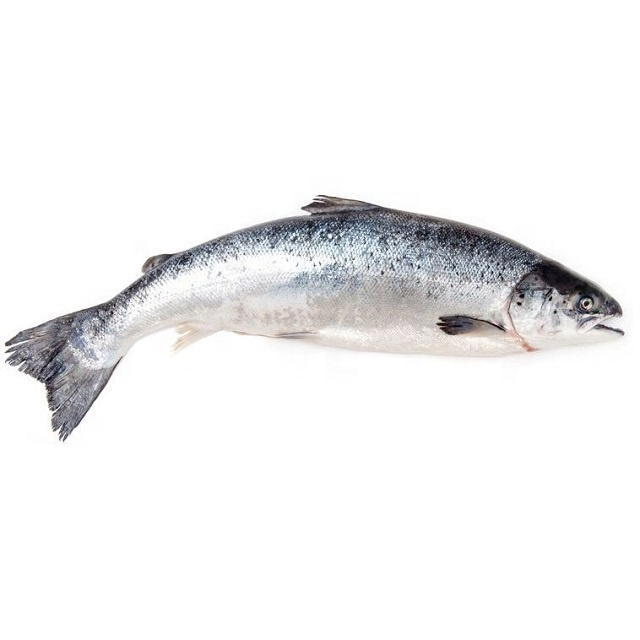 Frozen Seafood Fish Fillet Pink Salmon for Sale at Low Price