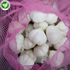 /product-detail/supplier-wholesale-new-crop-fresh-chinese-3p-pure-white-garlic-with-best-price-60726974164.html