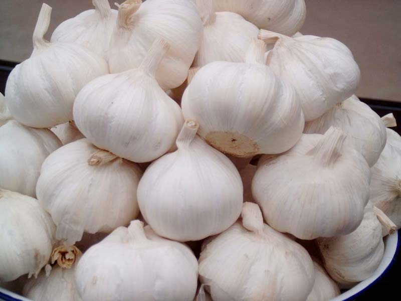 fesh natural garlic
