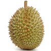 Durian Fruit Freeze Dried Durian For Wholesale !!!