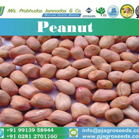 2017 Best Quality Peanut From India