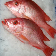 Fresh and Frozen Red Snapper Fish forsale at a low rate