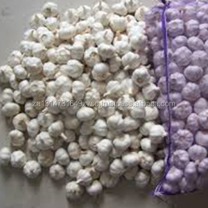 fresh single clove garlic for sale