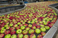 FRESH SOUTH AFRICA APPLES / SOUTH AFRICAN CLASS 1 APPLES