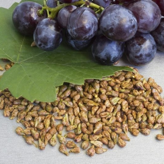 High Quality Grape Seed available