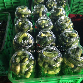 Vietnam canned cucumbers/ gherkins in brine