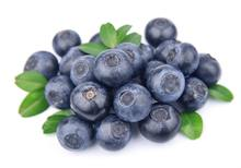 Egyptian supplier best taste fresh blueberry fruit prices