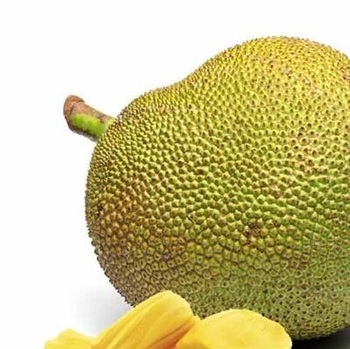 best quality Fresh jack fruits for sale at best price